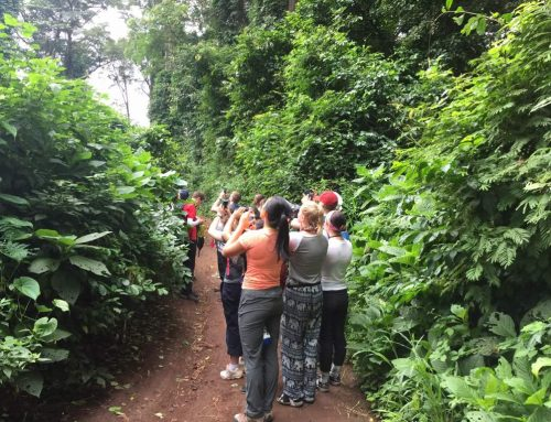 Rau Forest Nature Walk Day Trip