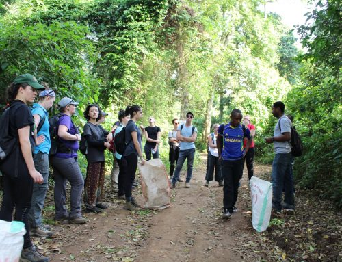 Herbalist Tour with forest Nature Walk