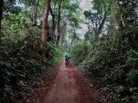 rau forest cycling