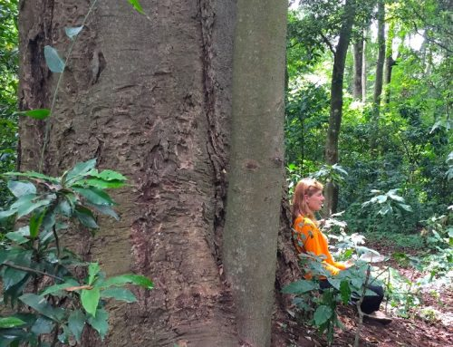 Silent Walk and Meditation in the Rau Forest Half Day