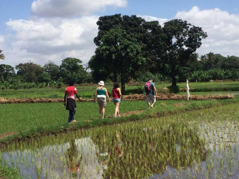walking in the farm