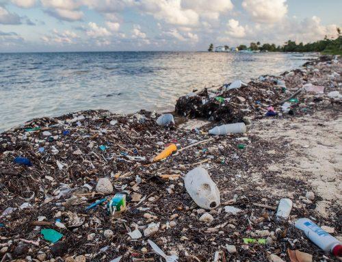Rau Eco Tourism Eliminates Plastic Straws